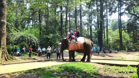 Hiburan: naik gajah.